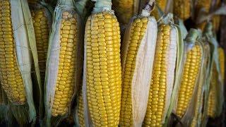 今日华尔街|川普称中国将大采购美国玉米;京东要裁10%高管;网易考拉拟买亚马逊中国海外购;传比特大陆大幅裁员AI成重灾区(20190220)