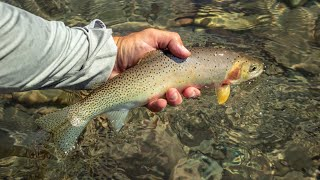 Fly Fishing for Trout | Flathead River, Montana