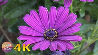📗Super bloom spring wildflowers-Sounds of birds bees crickets-Breathtaking colors of nature-4K video