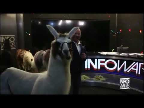 Alex Jones Rents Llamas For A Grift