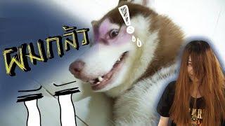 ลองใจหมา #3 // เสียงที่ทำให้แฟรงค์กลัว!! ทำให้หยุดเห่า??