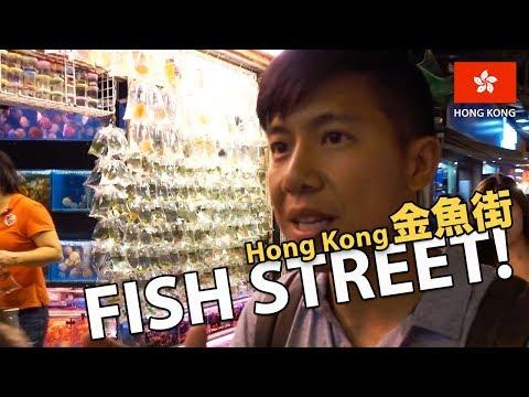 Fish & Corals Shopping in Hong Kong! (Goldfish Street 金魚街)