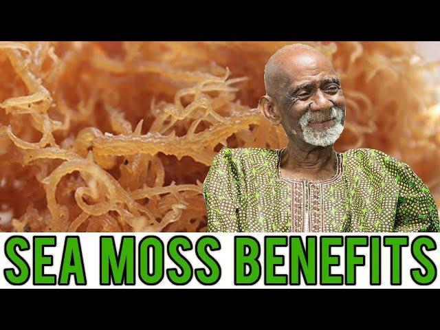 How To Explain Dr. Sebi To Your Grandparents Dr. Sebi Sea Moss