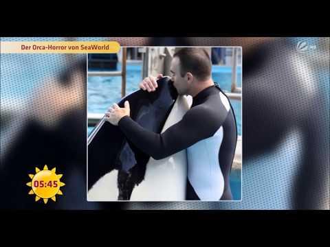 Schwere Vorwürfe gegen SeaWorld Kasatka R.I.P † 15.08.2017