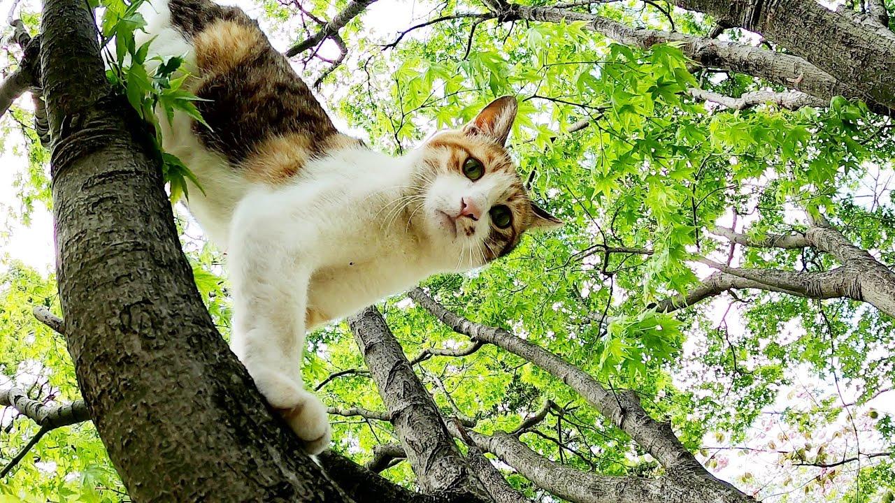 強風の中、軽快な身のこなしで木に登る三毛猫
