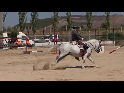 Equitación de Trabajo 280821 Video Doma 3