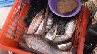 Рыбалка на р бирюса п покатеево