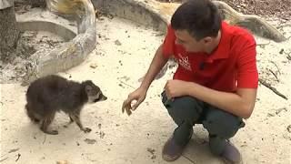 В харьковском экопарке справляют новоселье еноты