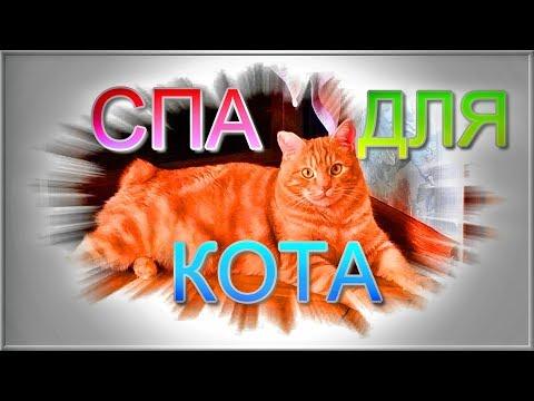 Спа для кота! курильский бобтейл 12+