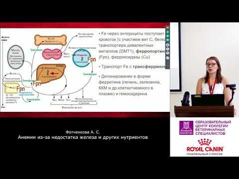 Фотченкова А. С. - Анемии из-за дефицита железа и других нутриентов