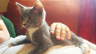 CLIPPING 5-WEEK OLD KITTEN'S CLAWS | how to cut kitten nails