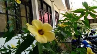 preview picture of video '#trip #desa                                                                 Jalan-jalan Barito Utara'