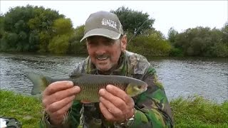 Chub fishing Collingham river Trent