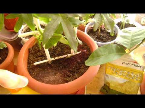 Как избавиться от вредителей в горшках и на комнатных растениях!