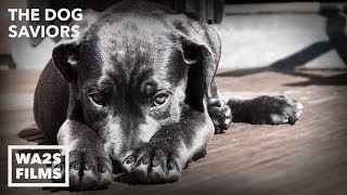 Hope For Dogs Rescue Starving Scared Dog With Broken Heart - THE DOG SAVIORS