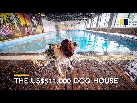 Man builds $500,000 mansion for his dog