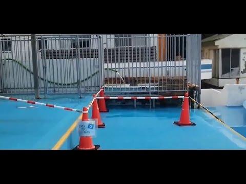 Dolphin Resort Taiji Japan