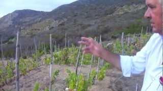 preview picture of video 'Ansonaco Carfagna o della nuova vita dell'Isola del Giglio'