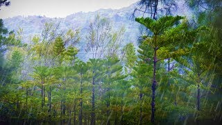 Forest Rainstorm Sound for Sleeping or Studying | Rain Sounds White Noise 10 Hours