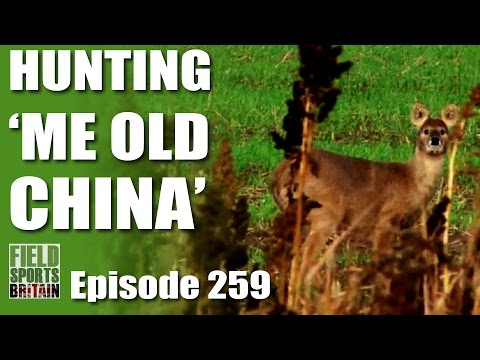 Fieldsports Britain – Hunting  'Me Old China'