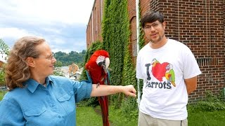 Rehoming Santina - Adopting Out Green Winged Macaw