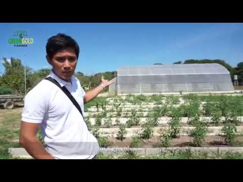 Traditional Farming Vs. Greenhouse Farming