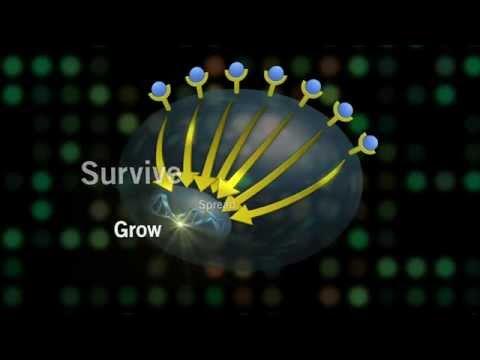 Virus del papiloma humano sintomas mas comunes
