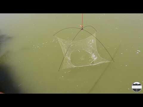 Cefali pescati con la tecnica del bilancino 1,5 x 1,5 - Pesca col Bilancino - Fiume Brian Caorle