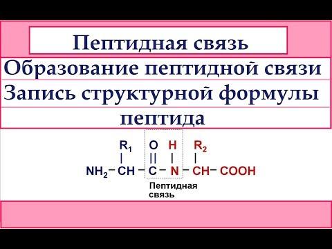 Пептидная связь. Образование пептидной связи. Запись структурной формулы пептида.