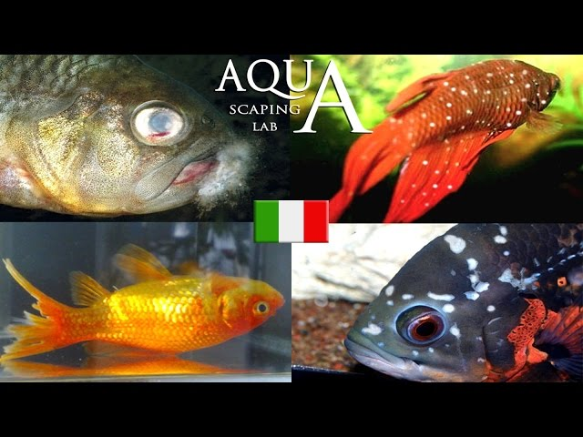 Aquascaping Lab - Malattie dei pesci, come curarle (puntini bianchi, corrosione delle pinne ecc..)