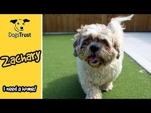 Zachary | Dogs Trust Darlington
