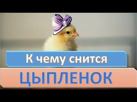 К чему снится цыпленок | СОННИК