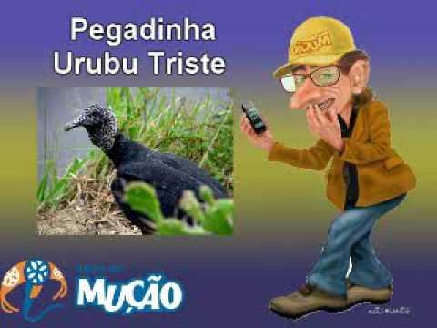 BAIXAR DO MUSSAO GRATIS PEGADINHA