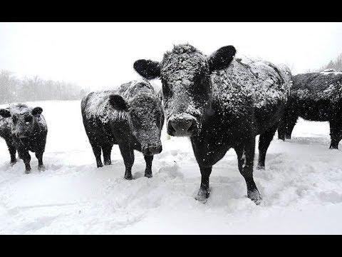 Приметы 27 января. Молоко в этот день считалось Чудодейственным!