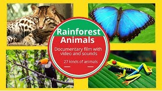 RAINFOREST ANIMALS FOR KIDS-DOCUMENTARY NAME AND SOUNDS WILD  ANIMALS