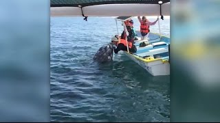 Wild whale and American tourist 'kiss' in Magdalena Bay