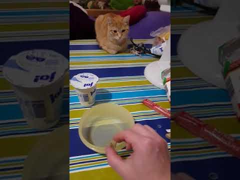 Tricks für Katzen - Kautablette mit Leberwurst und Magermilchjoghurt Teil I