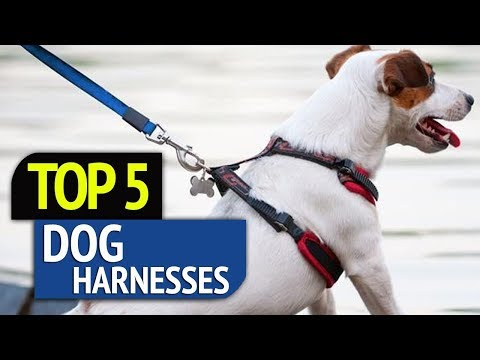 TOP 5: Dog Harnesses 2018