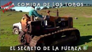 La Comida De Los Toros, El Secreto De La Fuerza. Parte 1 2.