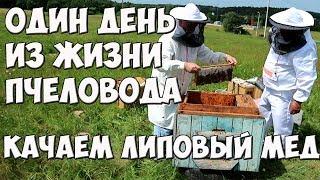Один день из жизни пчеловодов любителей| Качаем липовый мёд