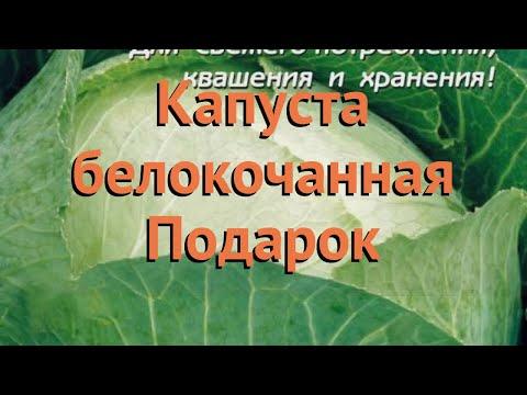 Капуста белокочанная Подарок (podarok podarok) 🌿 Подарок обзор: как сажать, семена капусты Подарок