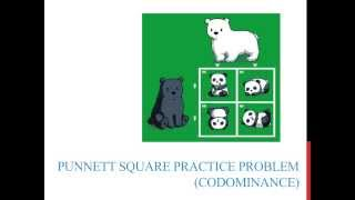 Punnett Square Practice Problems (codominance)