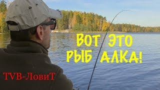 Озеро балтым рыбалка
