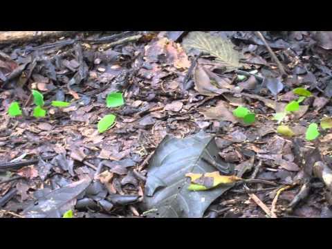 Litrato baguhan halamang-singaw sa kuko