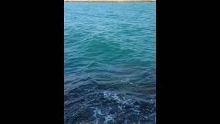 preview picture of video 'Pesca de dorado en burriana'