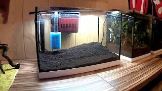Gambario 25 litros fácil con killis//raycar acuarios