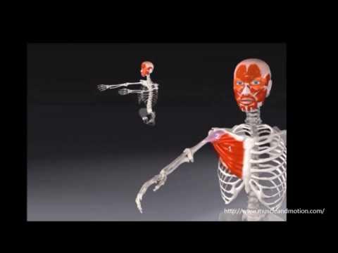 Welche Übungen für Rückenschmerzen zu tun