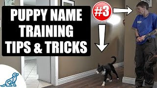 Simple Tricks For Teaching Your Puppy Their Name - Puppy Training Secrets
