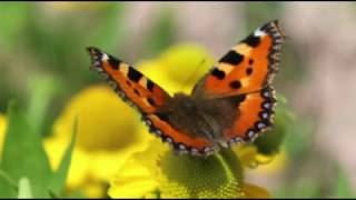 Motýlek  -  Václav Neckář
