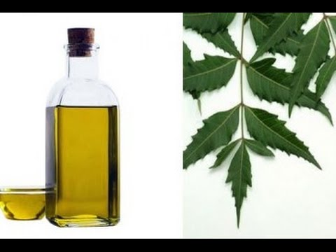 Video How To Make Neem Oil at Home and Benefits